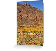 El Paso's Annual Poppy Display Greeting Card