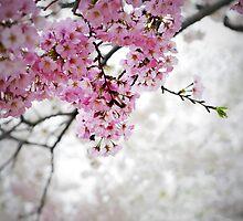 Cherry Dreams by Jane Brack