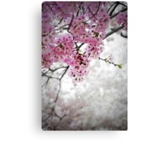 Cherry Dreams Canvas Print
