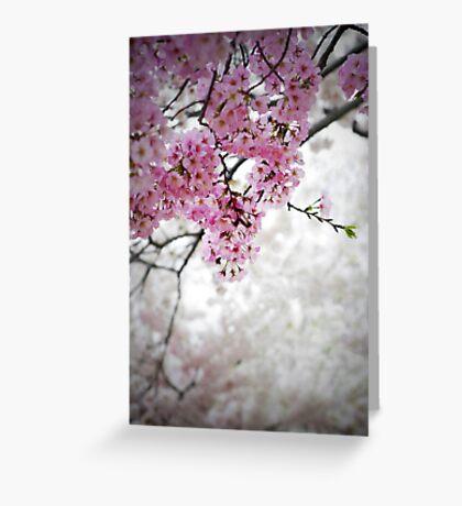 Cherry Dreams Greeting Card