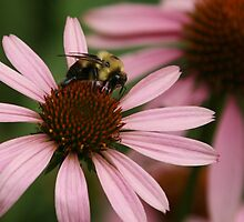 bumble bee by ffuller