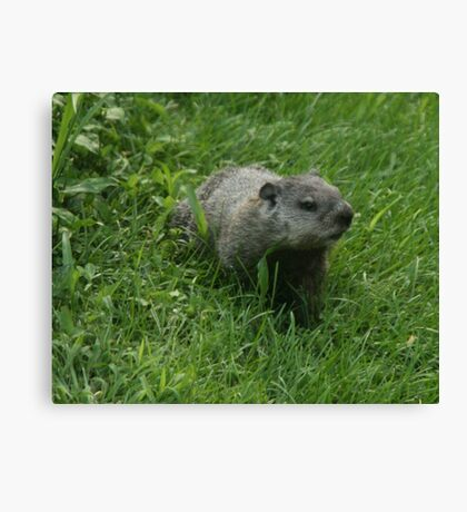 groundhog Canvas Print
