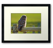 Golden Eye Framed Print