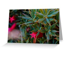 Cranberry flower(native wildflower) , from the shoot out with Alenka  Greeting Card