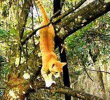 Kitty Gymnastics by Sandra Russell