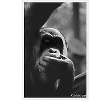 In the shadows of an orang Photographic Print