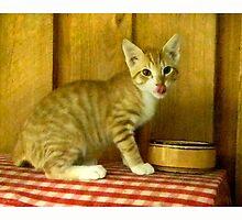 Growing up Happy/ Orange Tabby Kitten by Sandra Russell