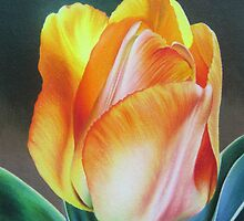 Spring yellow tulip by lanadi