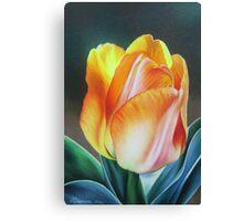 Spring yellow tulip Canvas Print