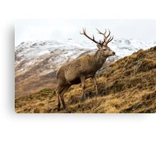 Royal Red Deer Stag in Winter Canvas Print