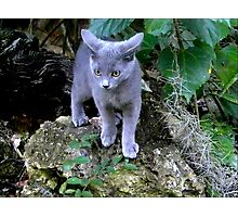 Gray Kitten Exploring a Big World Photographic Print