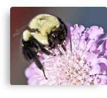 Bumble Bee At Work Canvas Print