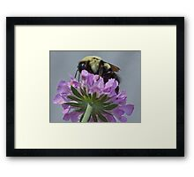 Bumble Bee At Work Framed Print