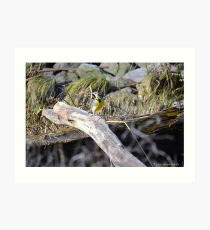 Meadowlark Art Print