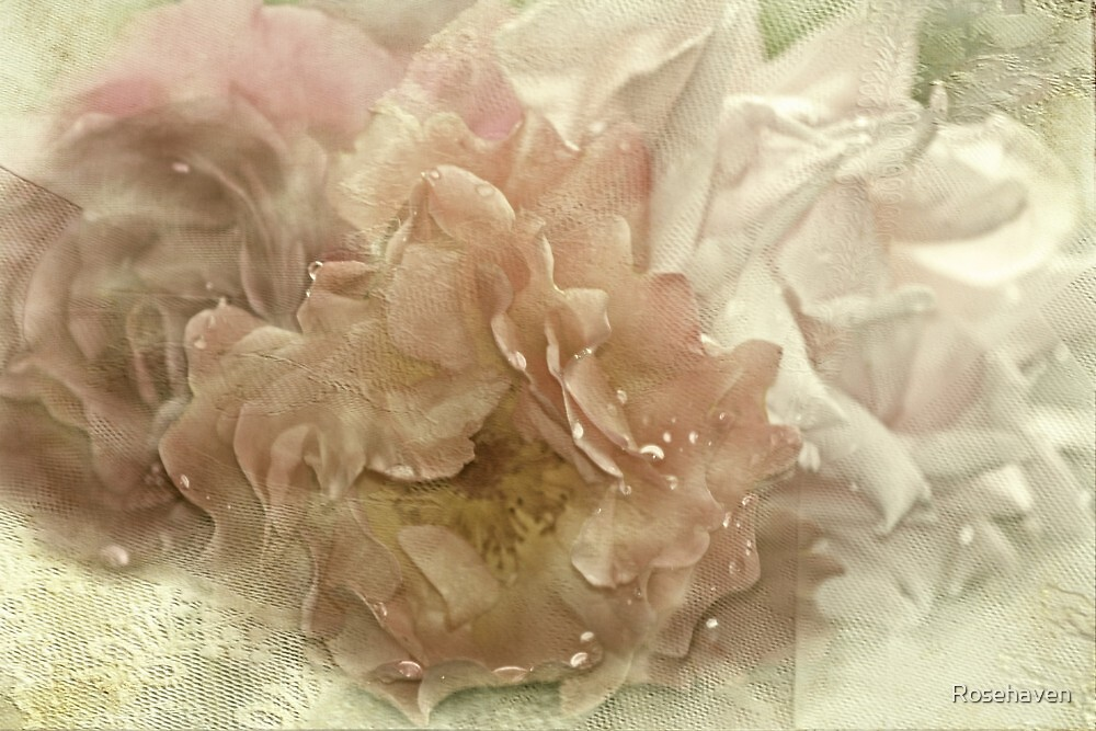 """Antique Roses....."" by Rosehaven"