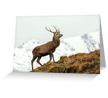 Red Deer Stag in Winter Greeting Card