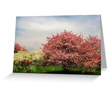 Spring-Arie den Boer Crab Apple Arboretum Greeting Card