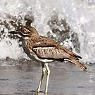Water Thick-Knee by Karue