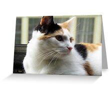 Precious Baby Kitty Face Greeting Card