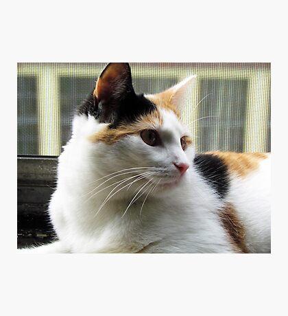 Precious Baby Kitty Face Photographic Print