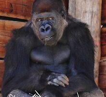 """Gorilla - Air Of Satisfaction""  by jonxiv"