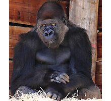 """Gorilla - Air Of Satisfaction""  Photographic Print"