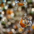 Suspended Bokeh by seriocomic