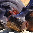 """Let Sleeping Hippos Lie"" by jonxiv"
