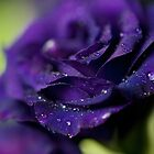 Dropes on the flower by Nevreva