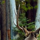 BUCK by Betsy  Seeton
