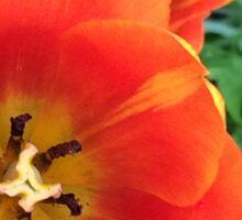 Orange Poppy Flower Photography Sticker