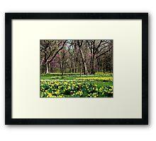 Springtime Forest Framed Print