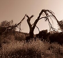 Lonely Tree by Nikolas Mavrikakis