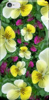 Violas by Kelly Cavanaugh
