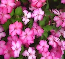 Impatiens by Kelly Cavanaugh