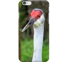 Sandhill Crane (iPhone Case) iPhone Case/Skin