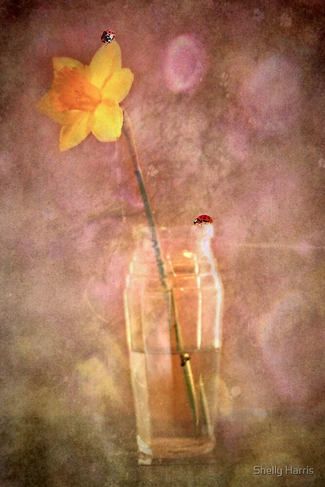 Ladys And A Daffodil by Shelly Harris