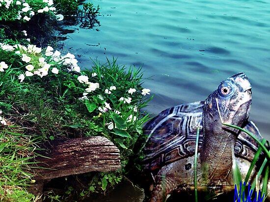 nature-Turtle  by NIKULETSH
