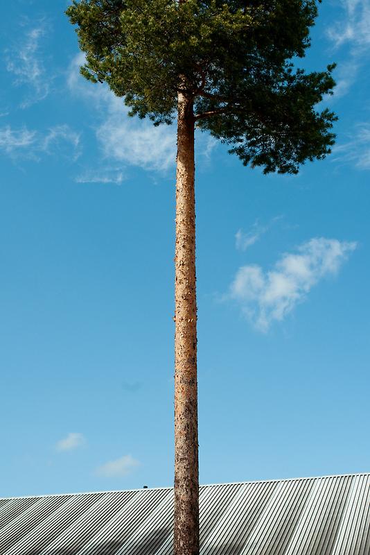 Growing Above You by Bjarte Edvardsen