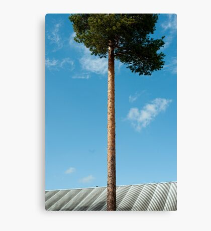 Growing Above You Canvas Print