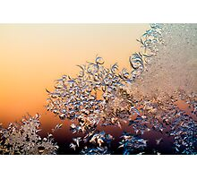 winter came knocking color Photographic Print