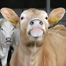 Moo Talking To Me? by Barrie Woodward