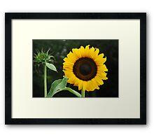 Girassol Framed Print