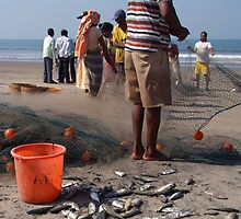 Fishermen Sorting the Catch Arambol by SerenaB