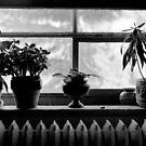 Window sill by Paul Politis