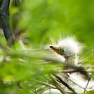 Day One New Egret Chick by Joe Jennelle
