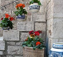 flower pots on the steps by Anne Scantlebury