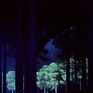 Pine Trees At Night by Eve Parry