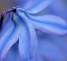 bluebell II by BlueBelle