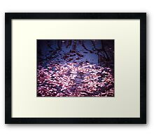 Spring's Embers - Cherry Blossom Petals on the Surface of a Pond Framed Print